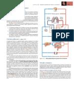 circuito pulmonar.docx