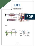 Estudo Dirigido I - Fisiologia Humana_biologia (1)