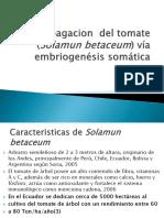 Propagacion Del Tomate (Solamun Betaceum) Vía