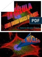 el_nÚcelo.ppt