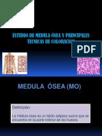 Estudio de Medula Osea