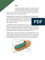 informe fisiologia