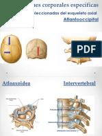 Articulaciones-morfo.pptx