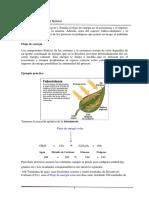 2.2_Flujo_de_Energia.pdf
