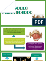 Musculo Milohiodeo y Genihiolodeo
