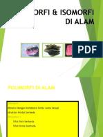 Polimorfi Alam