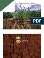 Asimilacion de N y P en plantas