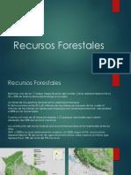 Bosques Bolivia