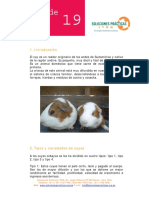 FichaTecnica19-Crianza+de+cuyes.pdf