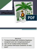 Plantae Ok Gak Bisa Di Buka
