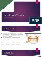 Anatomia Valvula