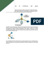 Estructura de la molécula del agua.docx