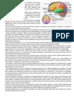 Áreas corticales