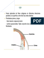 Morfologia Del Globo Ocular