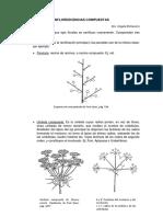 Complemento teórico INFLORESCENCIAS COMPUESTAS.pdf