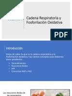 Cadena Respiratoria y FosforilaciónOxidativa
