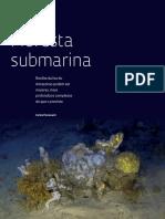 Floresta Submarina [Revista Fapesp 2018]