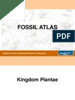 fossil atlas-seacarl.pdf
