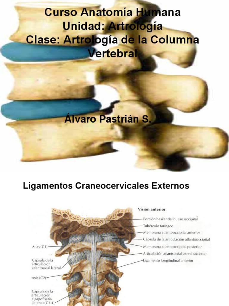 Clase Artrología Columna