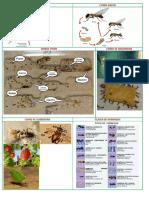 Presentacion Mundo de las Hormigas
