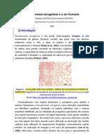 20707027_53_Pseudomonas_aeruginosa