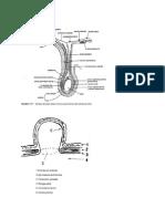 spermatic Cord Dan Kantung Hernia