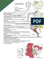 Anatomie Hochcervikal Innervation 17