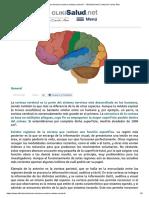 Cómo funciona la corteza cerebral