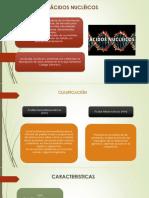 Diapo. acidos nucleicos.pptx