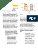 histologia tecido adiposo