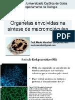 8. Organelas envolvidas na síntese de macromoléculas.pdf