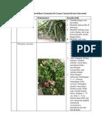 Tabel Pengamatan Mengidentifikasi Tumbuhan Di Taman Nasional Botani Sukorambi