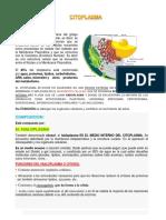 CITOPLASMA Trabajo Diapositivas