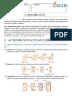 2. La Reproducción Asexual en Unicelulares.