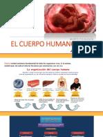 elcuerpohumano-170602003846.pdf