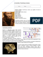 Guia Paranthropus Robustus