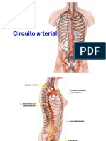 Circuito arterial.pdf