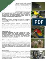 ANIMALES EN PELIGRO DE EXTINCION EN LA SELVA.docx