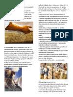 10 PARABOLAS.docx