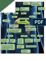 glandula adrenal dra manzur