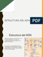 Estructura Adn Segundomedio