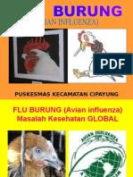 Flu Burung Kader Cipayung