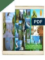 ECOSISTEMA ecosistema