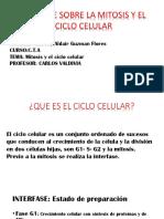 El Ciclo Celular y La Mitosis.