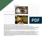 hewan ovovivipar wikipedia.docx