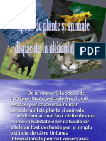 Plante Si Animale Disparute in Ultimul Deceniu