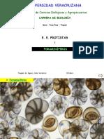 Clase Foramiiniferos