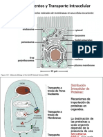Compartimientos y Transporte Intracelular