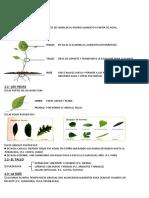Tema 5 Las Plantas
