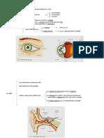 CCNN Los sentidos 4º primaria